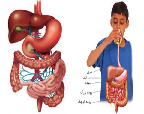 سفر غذا در دستگاه گوارش